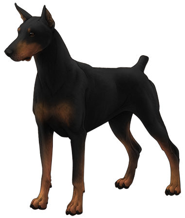 Doberman Pinscher, guarding page.
